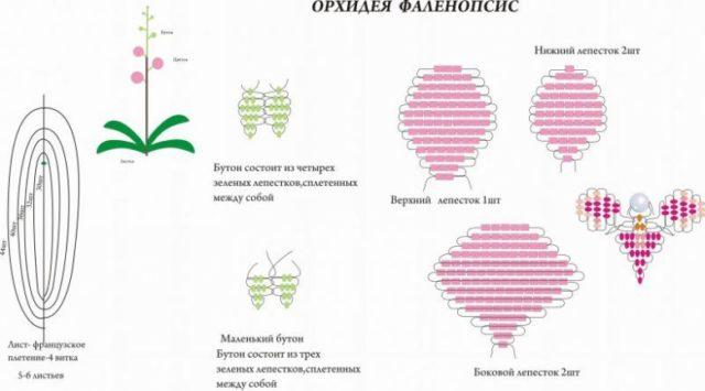 Мастер-класс по выполнению орхидеи из бисера