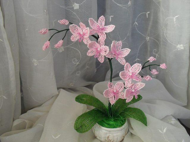 Орхидеи выглядят очень красиво