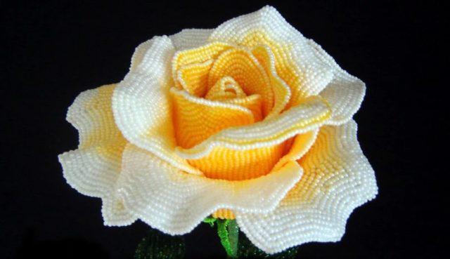 Виды и формы цветка бывают разные
