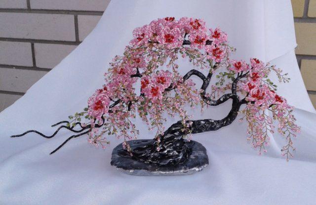 На государственном уровне празднуют цветение Сакуры в Японии