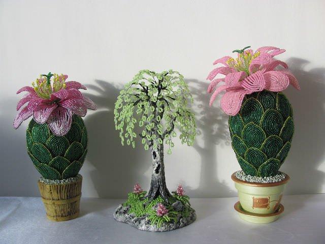 Готовый цветущий кактус