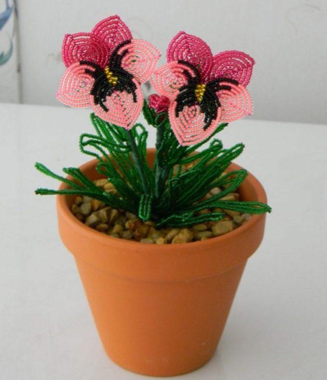 Цветок анютины глазки- прекрасное украшение вашего дома