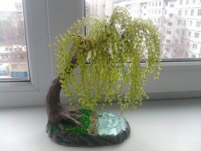 Дерево плакучая ива