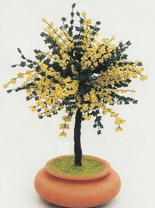 Дерево мимоза