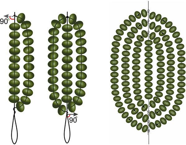Выполнение листьев для ириса