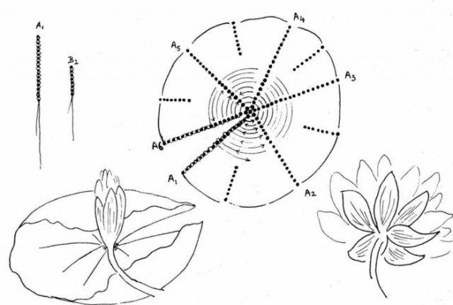 Плетение цветка лотоса