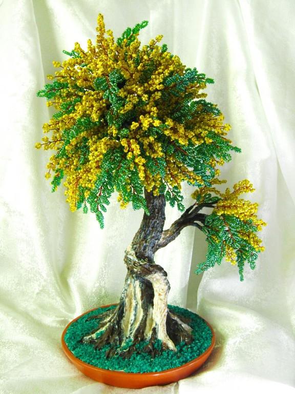 Деревце мимозы